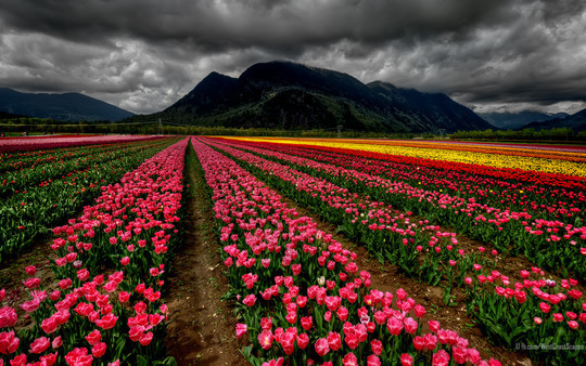 45 Amazing HD Wallpapers To Spice Up Your Desktop 32