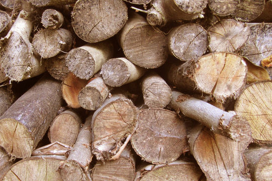 20 Free And High Resolution Log Textures 13