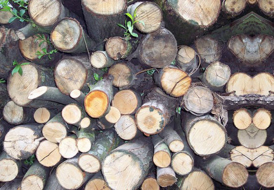 20 Free And High Resolution Log Textures 16