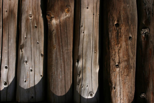 20 Free And High Resolution Log Textures 3