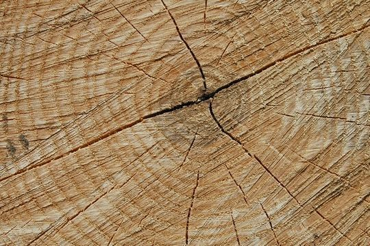 20 Free And High Resolution Log Textures 18