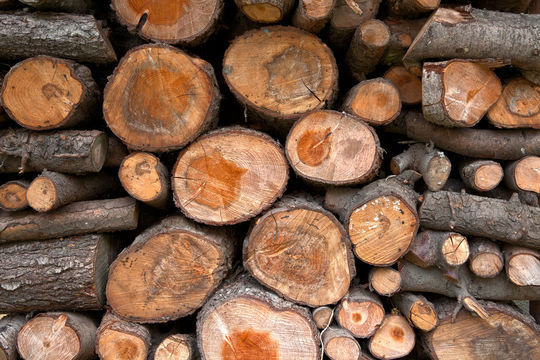 20 Free And High Resolution Log Textures 19