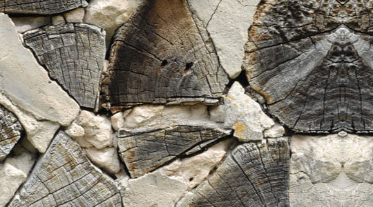 20 Free And High Resolution Log Textures 4