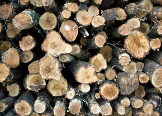 20 Free And High Resolution Log Textures 1