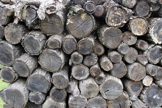 20 Free And High Resolution Log Textures 7