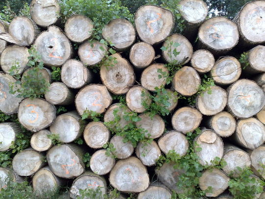 20 Free And High Resolution Log Textures 9
