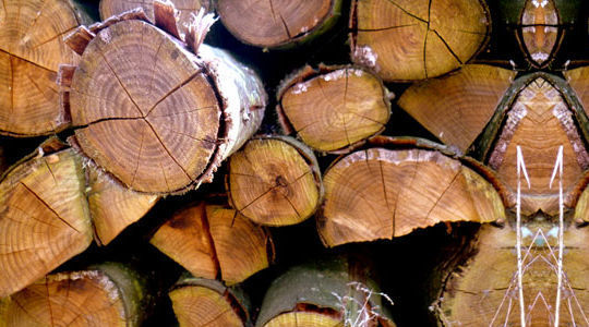 20 Free And High Resolution Log Textures 11